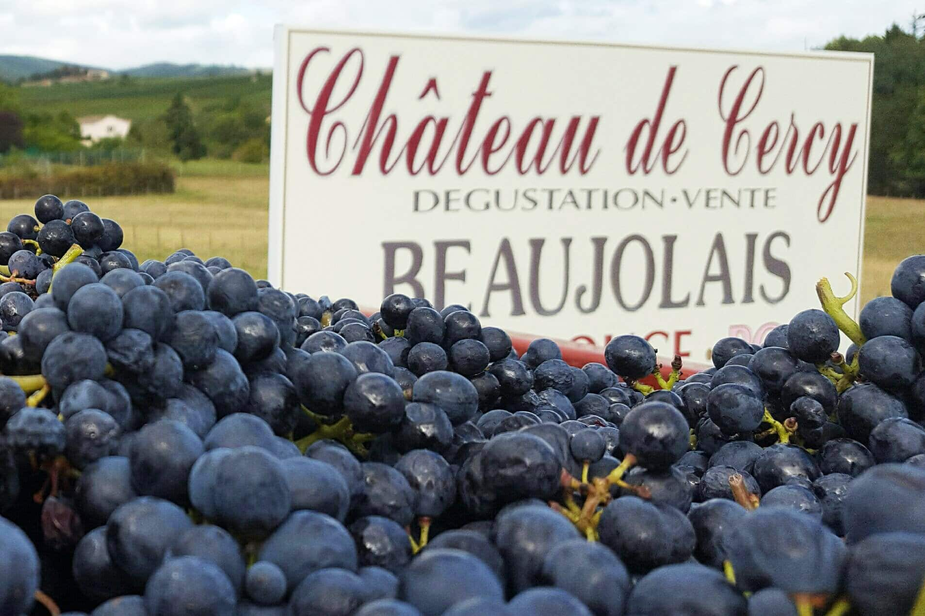 raisin-chateau-cercy
